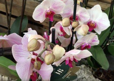 Blumen-angebote
