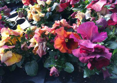 Blumen-onlinebestellung