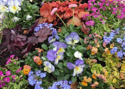 pflanzen-bestellen-raubling