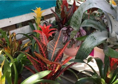 pflanzen-online-kaufen